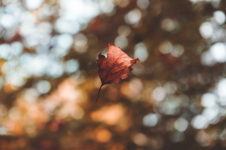 Autumn Vibes: What To Consider When You Want A Change Of Scene